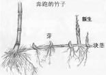 流行被视作一种块茎,是因为其在合适的时候以一种混乱的、切实际的,又是即兴的方式——而非精致的、程序化的理论化的方式——发展生长。块茎逻辑反对树状逻辑,后者是连续的垂直的生长系统,具有以固定根系为中心的等级结构。